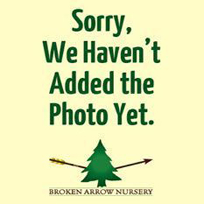 At the Nursery Gift Card